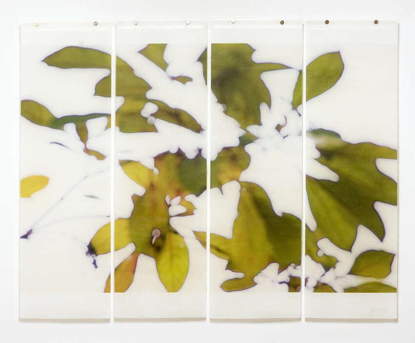 Jeri Eisenberg_Canopy (Bok Gardens)_Archival Pigment Ink on Japanese Kozo Infused with Encaustic Medium_36x45.5