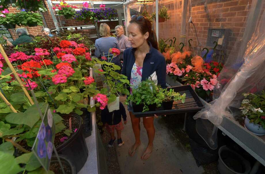 Wilton resident Ashleigh Lauria picks out flowers at The Wilton Garden Club Plant Sale Pre-Sale Wednesday, May 9th, 2018 in its Greenhouse at Comstock Community Center in Wilton, Conn. The Wilton Garden Club Plant Sale will be at the Town Green for the annual Mother's Day sale this weekend, May 11th from 12 – 6 pm, and May 12th from 10 am – 2 pm. Photo: Erik Trautmann / Hearst Connecticut Media / Norwalk Hour