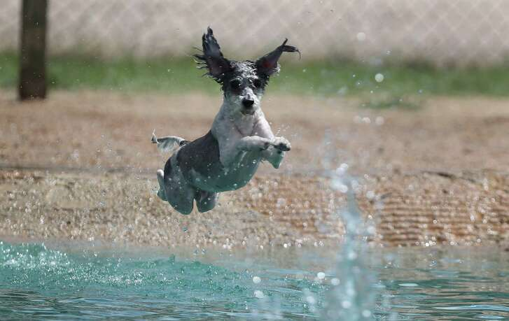 Danny Jackson Family Bark Park features swimming ponds.