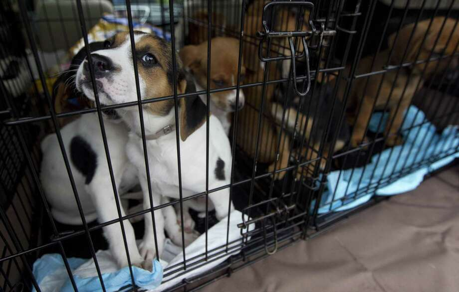 The resources needed to serve low-income pet owners and stray animals just aren't there yet for San Marcos. Photo: Jason Fochtman /Houston Chronicle / © 2018 Houston Chronicle