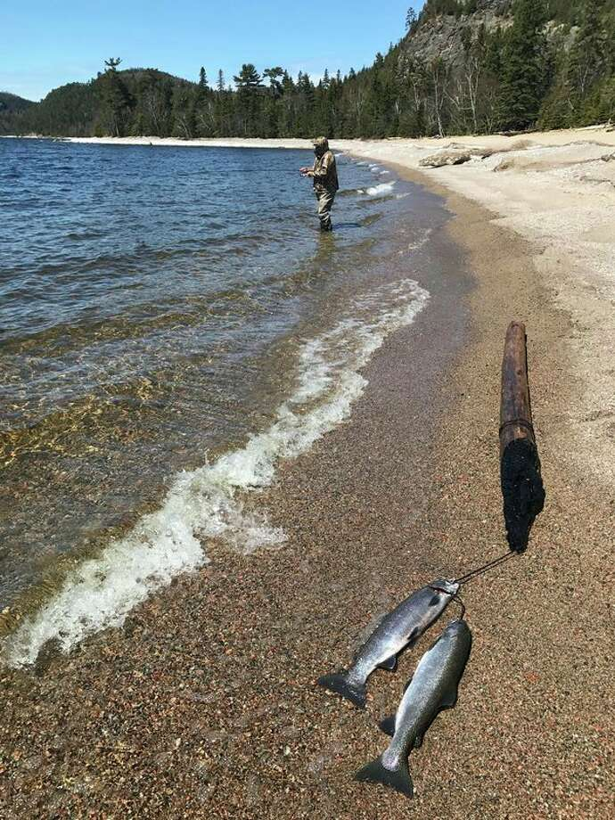A pair of steelhead lies tethered on a Lake Superior beach near Wawa, Ontario. The daily and possession limit under the more liberal of two fishing licenses is two fish per day, but one can continue fishing on a catch-and-release basis. (Steve Griffin/Hearst Michigan)