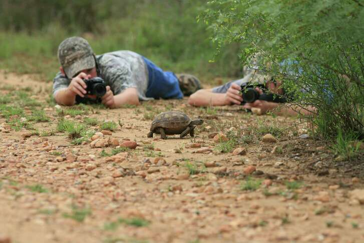 Youngsters seem to have a different perspective on wildlife photography that can result in interesting details and angles such as this turtle being photographed by Joe and James Richards.