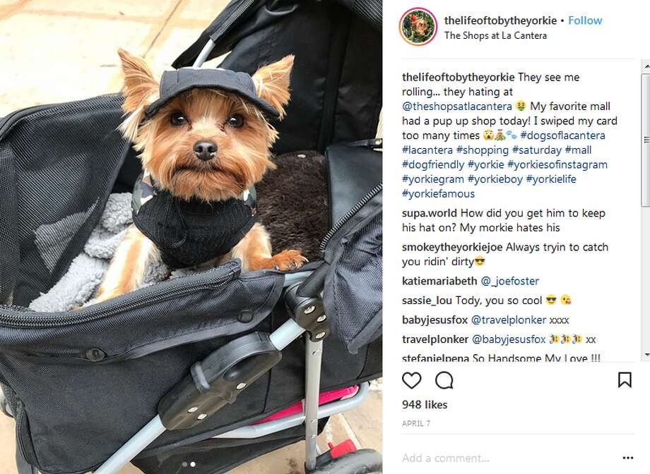 thelifeoftobytheyorkie: They see me rolling... they hating at @theshopsatlacantera My favorite mall had a pup up shop today! I swiped my card too many times Photo: Instagram Screengrabs