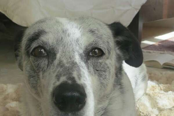 Pets remembered: Gracie