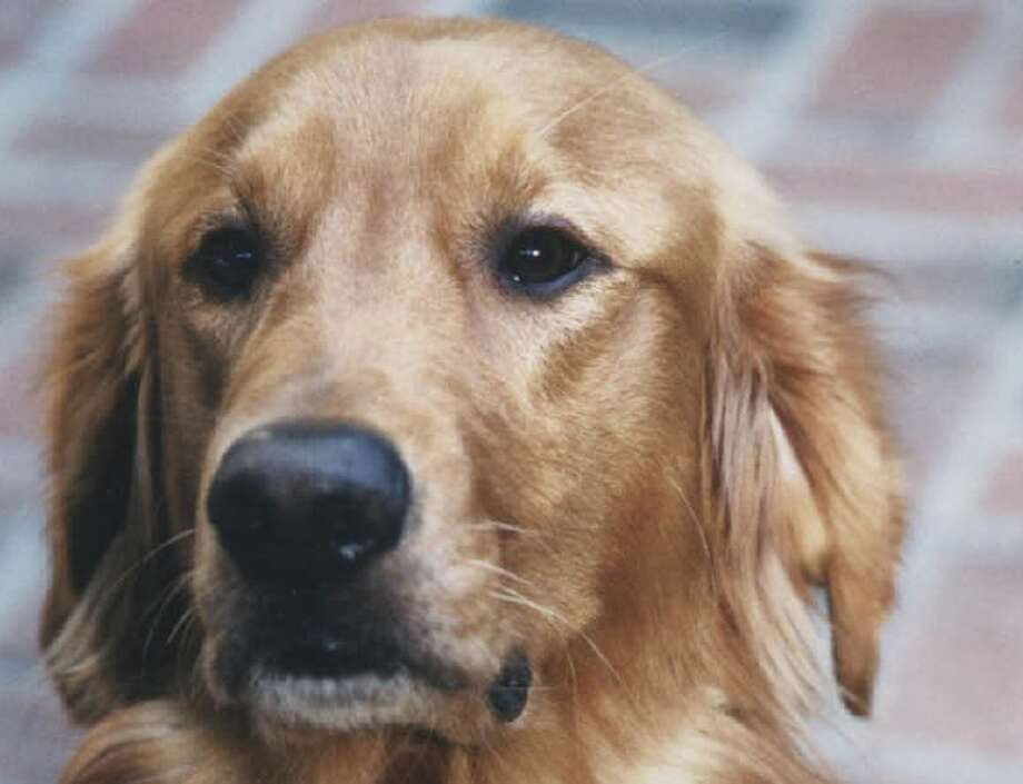 Pets remembered: Beau