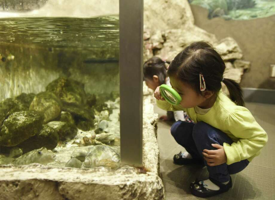 Yunha Cho, 2, of White Plains, N.Y., uses a magnifying glass to look at fish underwater during the Bruce Beginnings program at the Bruce Museum in Greenwich. On Tuesdays in May, children ages 2 1/2 to five are invited to explore the museum's collections and exhibitions through picture books and hands-on activities free of charge with general admission. Photo: Tyler Sizemore / Hearst Connecticut Media / Greenwich Time