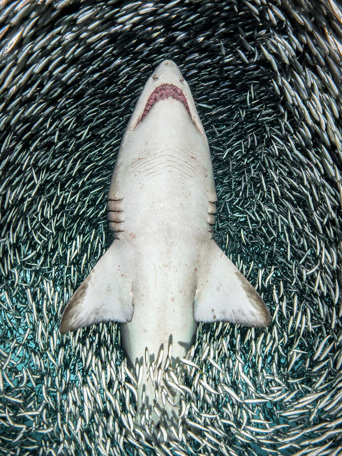 Harmony by Tanya Houppermans