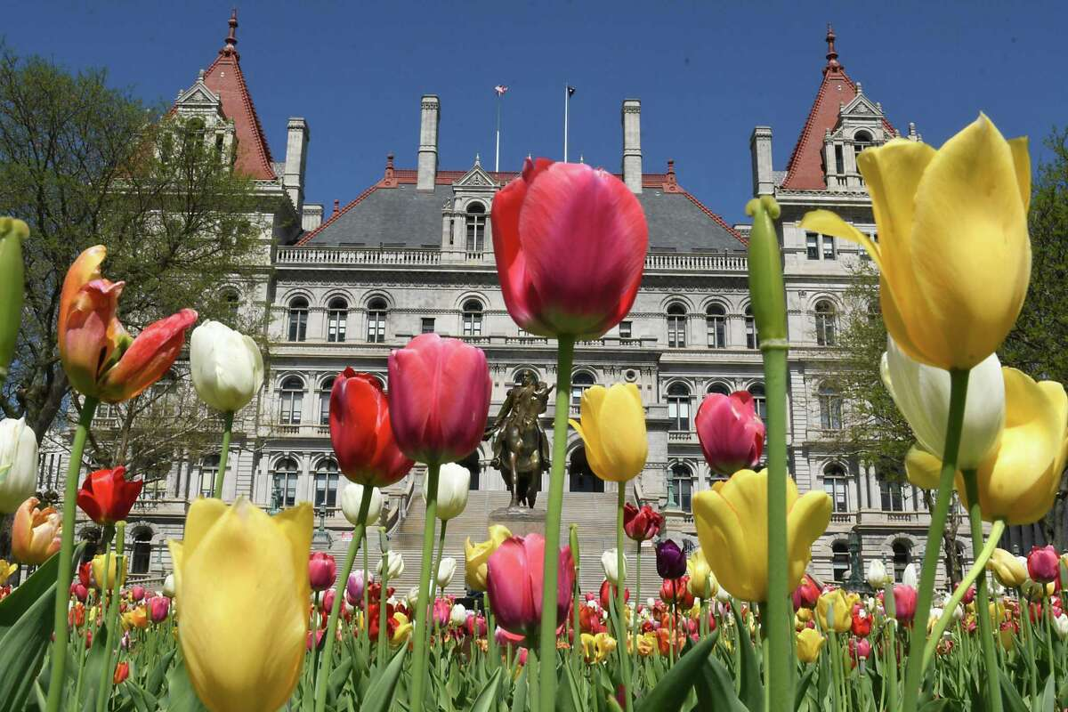Tulips in bloom decorate the east park with splashes of color at the New York State Capitol on Friday, May 11, 2018 in Albany, N.Y. Today begins the 70th Annual Tulip Festival. (Lori Van Buren/Times Union)