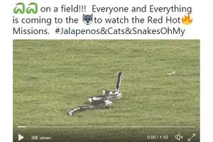 Snakes on a field!!!  Everyone and Everything is coming to to watch the Red Hot Missions.  #Jalapenos&Cats&SnakesOhMy