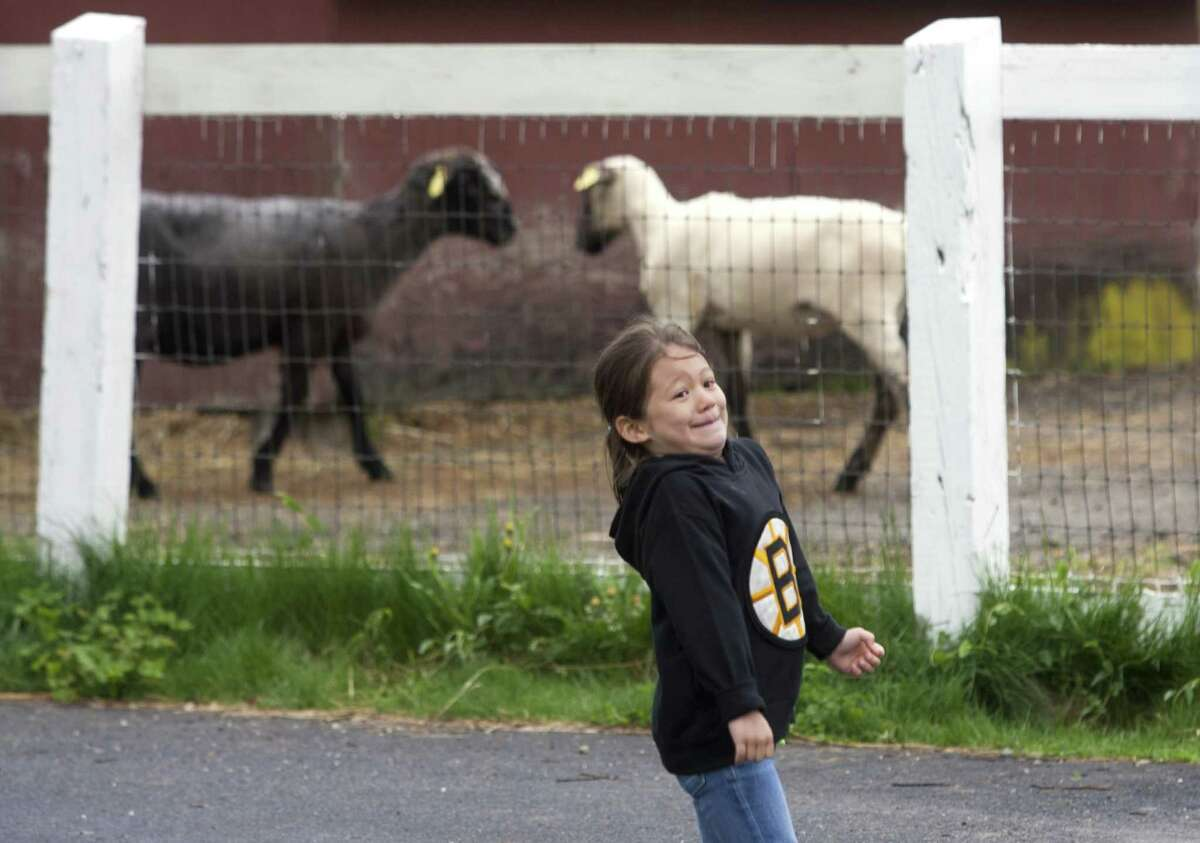 Lian Bettincourt, 5, of Trumbull, turns towards her mom Audrey to react as she rushes up to visit the sheep at the Trumbull Agriscience and Biotechnology Center's annual Mother's Day Plant Sale and Farm Fair in Trumbull, Conn., on Saturday, May 12, 2018. The annual plant sale features plants grown by the Agriscience students. Other activities included sheep shearing, a petting zoo, crafts fair, a silent auction and refreshments.