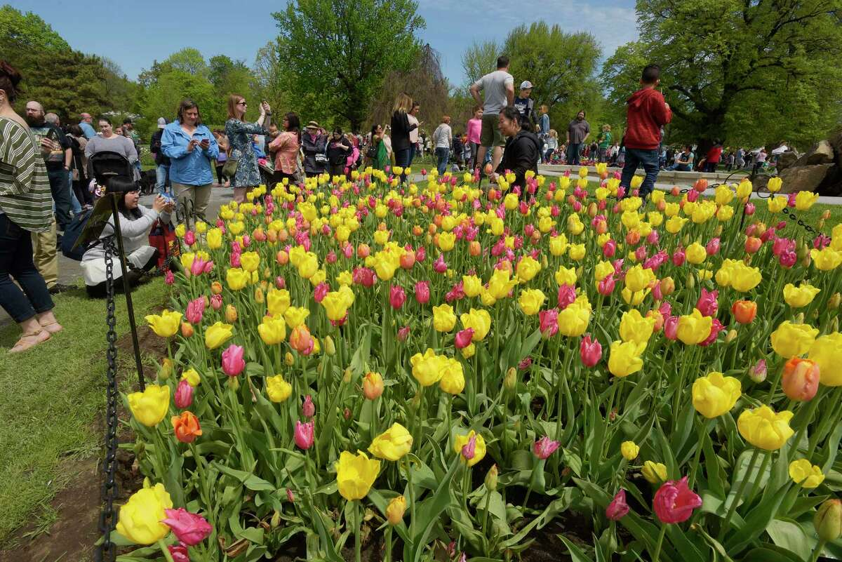 People fill Washington Park during the annual Tulip Festival on Sunday, May 13, 2018, in Albany, N.Y. (Paul Buckowski/Times Union)