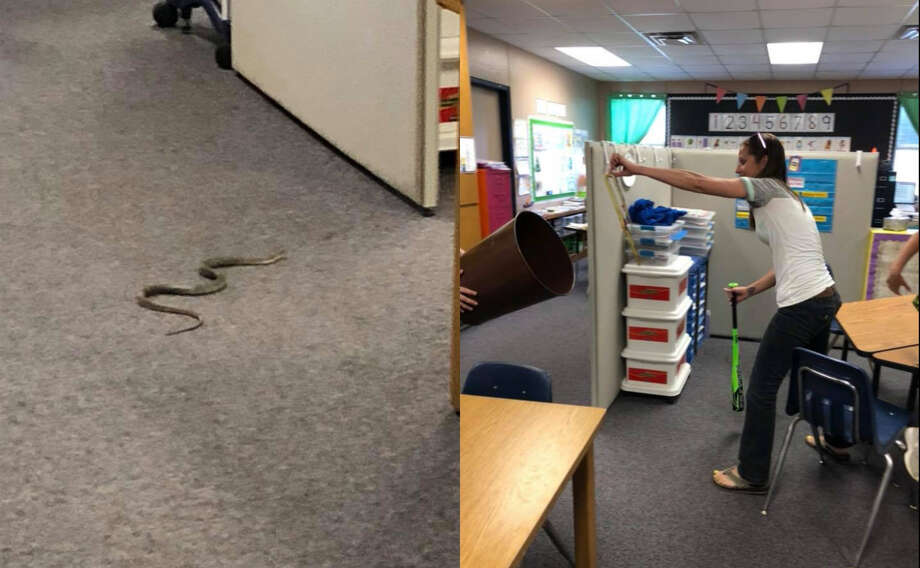 Honey Grove Elementary School Laurie Schroeder captured a snake that made its way into the school on May 9, 2018.Scroll ahead to test your knowledge of venomous and nonvenomous snakes.  Photo: Karon Cunningham