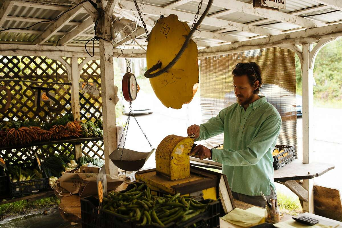 Tom Thompson of San Francisco pays for his produce at using the honor system the Gospel Flats farm stand in Bolinas.