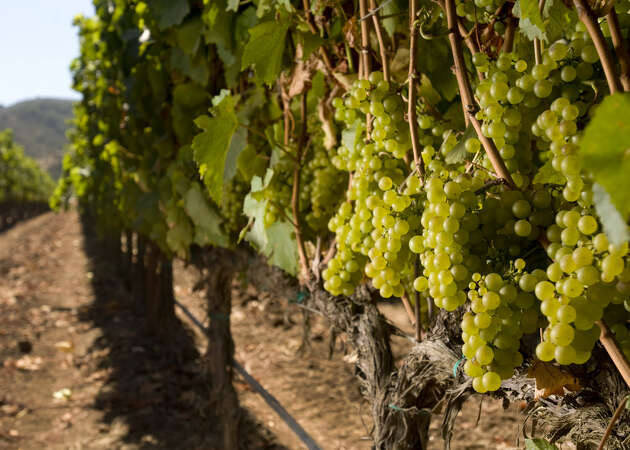 The best wineries of the Santa Lucia Highlands