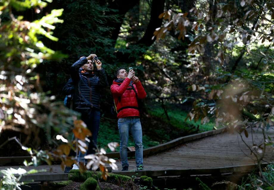 Visitors photograph the old growth redwood forest at Muir Woods National Monument. Photo: Paul Chinn / The Chronicle