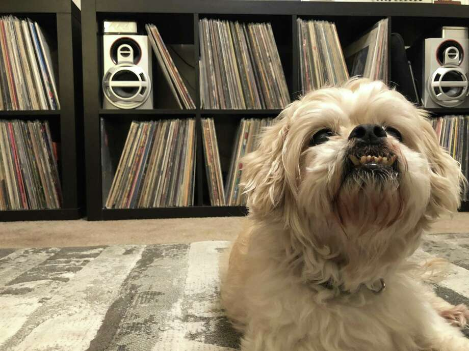 Prince Hlavaty, seen here, is a 12-year-old male Shih Tzu that was adopted by Craig Hlavaty in November 2017. He now runs his life.  See more photos of a few of Instagram's top dogs... Photo: Craig Hlavaty