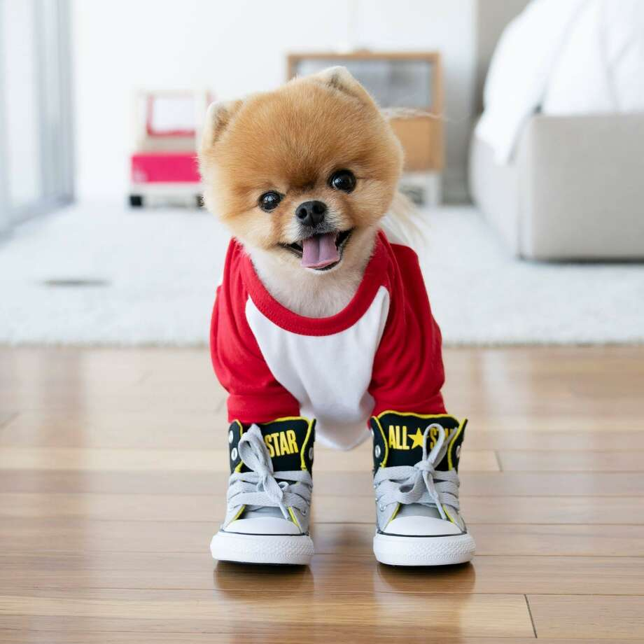 JiffPom is one of the most popular pups on Instagram with 8.7 million followers. Photo: Jiff Pom On Instagram