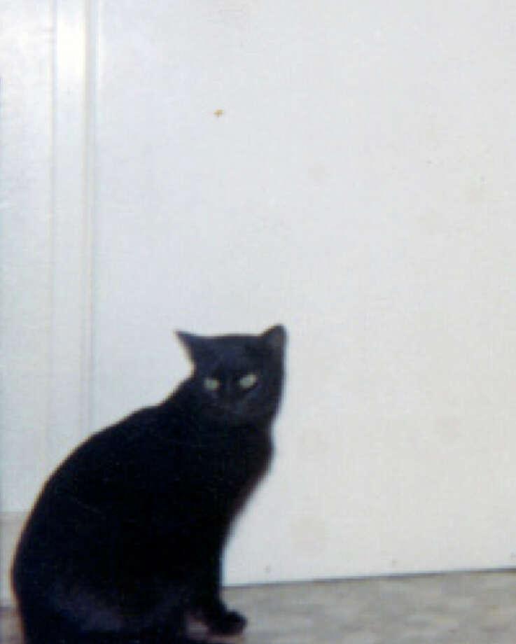Missy the cat. Photo: Courtesy
