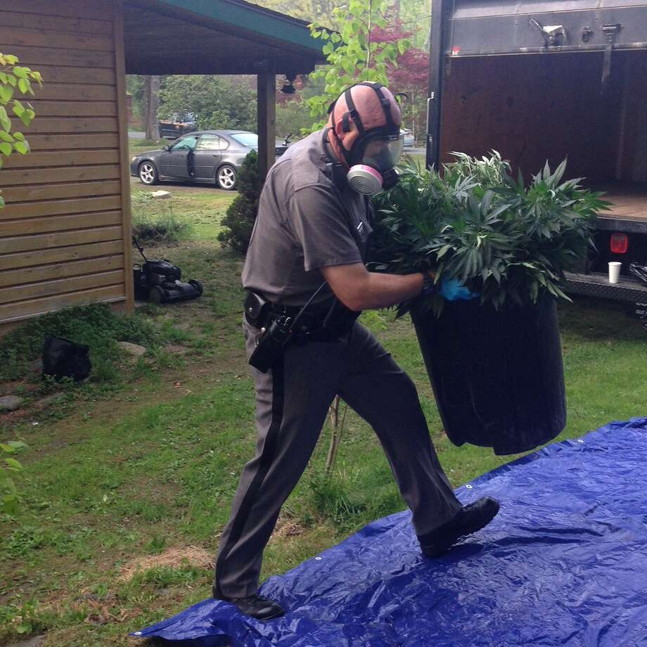 State Police discovered a large marijuana growing operation in Columbia County on Tuesday, May 15, 2018. Photo: NYSP