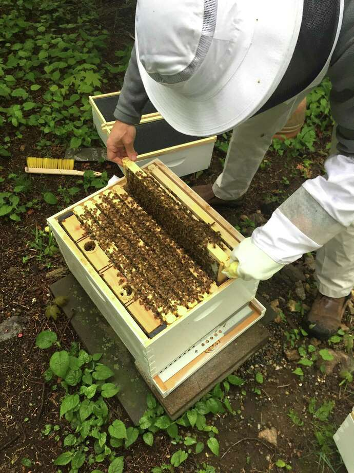 Rep. Jim Himes is also a beekeeper. He recently built a hive for honey bees behind his home on Cos Cob. Photo: Contributed Photo / Contributed Photo / Connecticut Post Contributed