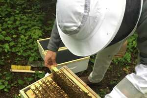 Rep. Jim Himes is also a beekeeper. He recently built a hive for honey bees behind his home on Cos Cob.