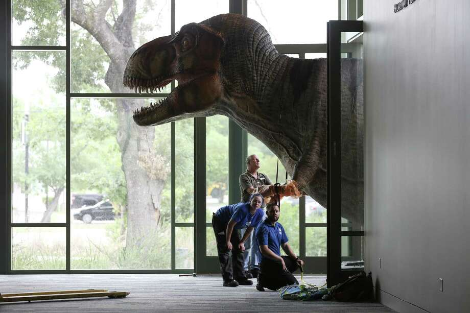 "A Tyrannosaurus Rex pokes its head into the Mays Family Center at Witte Museum, site of the big summer exhibit, ""Predators vs. Prey."" Photo: JERRY LARA /San Antonio Express-News / © 2018 San Antonio Express-News"