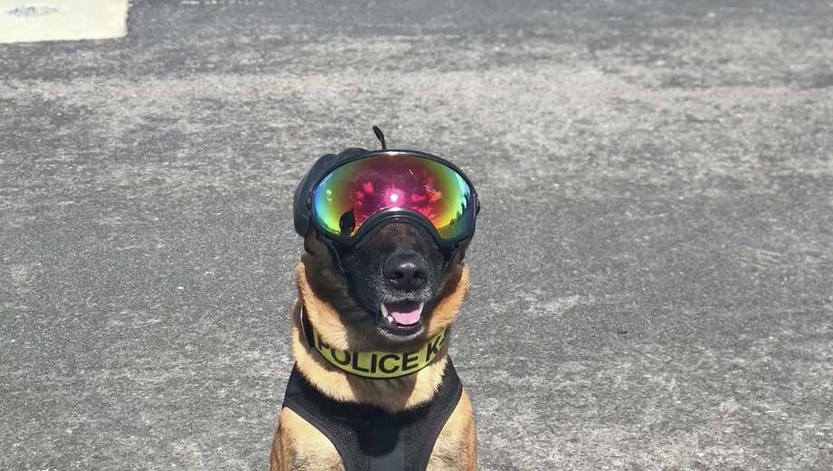 A dog wears safety gear during training exercises. Click through the gallery to see photos from a cliffside rescue involving a CHP helicopter in 2014. Photo: California Highway Patrol/USCG