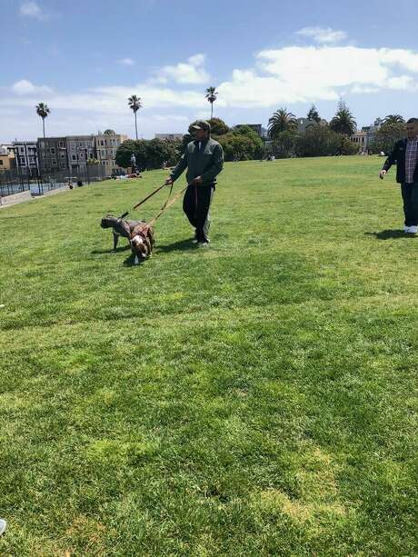 San Francisco police are seeking the public's help identifying the man and the two dogs pictured here. The pit bulls attacked a another dog, biting it and four people in Dolores Park. Photo: San Francisco Police Department