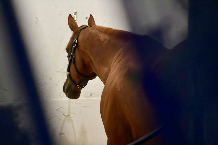Kentucky Derby winner Justify relaxes in his stall before going to the track for exercise on a rainy day at Pimlico.  The track will host the Preakness on Saturday.  Photo: Skip Dickstein / Times Union