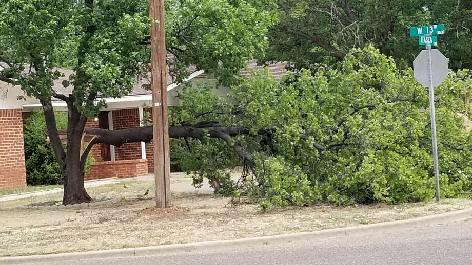 Several trees were damaged Tuesday night with the passage of a strong thunderstorm about 9 p.m., including this one at the intersection of Itasca and 13th street. A semi-truck-trailer was blown over as it was traveling along I-27 in the vicinity of the Wal-Mart Distribution Center. Photo: Robert Sanchez/Special To The Herald