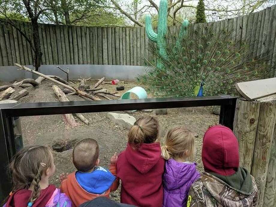 Children from Chickadees & Bumblebees LLC preschool enjoy a recent field trip to the Saginaw Children's Zoo. The children are, from left, Ellie Kinard, 3, McCoy Swanson, 2, Zoe Methner, 4, Nora Collicker, 3, and Dreaven Dawkins, 4.