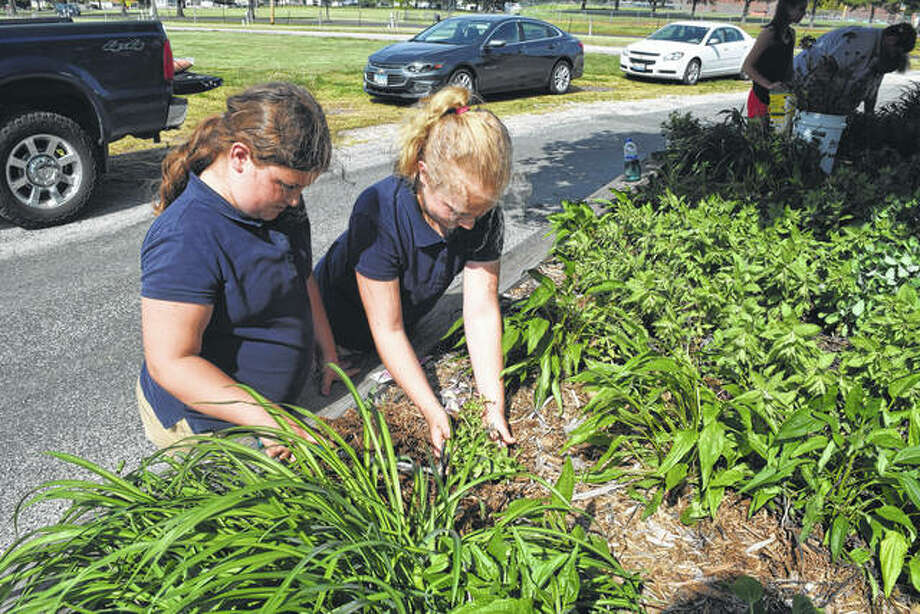 East Side Juniors 4-H Club members and sisters Emma Ford (left), 9, and Savanna Ford, 10, plant petunias Thursday in the Clyde York Memorial Flower Bed at the Morgan County Fairgrounds. East Side Juniors members have maintained the flower bed for many years. The Ford sisters are the daughters of Steve and Sarah Ford of rural Chapin. Photo:       Greg Olson | Journal-Courier