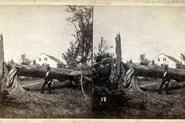 View of a downed tree, Wallingford, Connecticut, 1878. This stereoscopic slide depicts storm damage following a tornado. From the New York Public Library. (Photo by Smith Collection/Gado/Getty Images).
