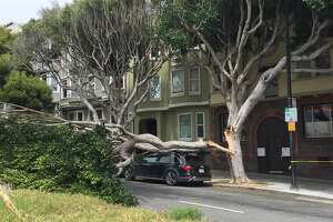 A large tree fell over onto Dolores Street at 18th Street on Friday, May 18 at about 2:15 p.m.
