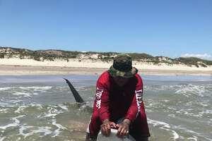 Team of anglers reel in 11-foot tiger shark at Padre Island National Seashore on May 16, 2018.