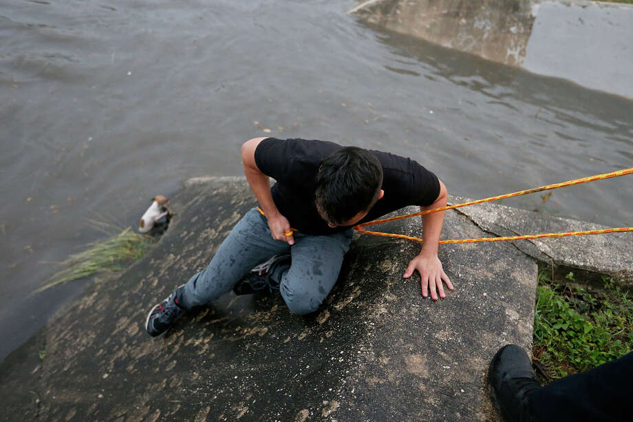 San Antonio Express-News reporter Alexandro Luna rescues a dog from the drainage ditch at Woodlawn Lake Park with the help of Park Police Officer David Ramirez, Sunday May 20, 2018, as storms move through the city. Photo: Edward A. Ornelas, San Antonio Express-News / © 2018 San Antonio Express-News