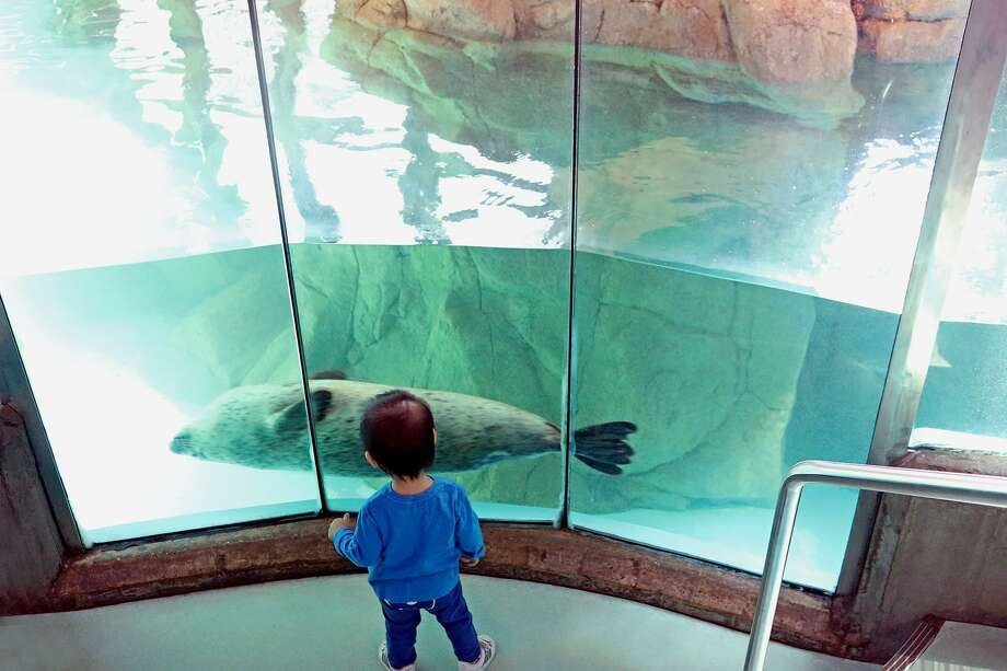 A child at the Maritime Aquarium in Norwalk. Photo: Contributed Photo