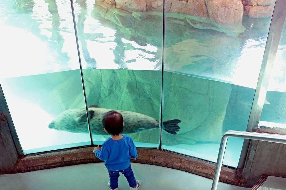 A child at the Maritime Aquarium in Norwalk. Photo: Contributed Photo
