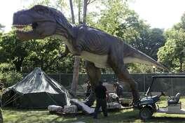 A Tyrannosaurus rex is part of a new dinosaur exhibit at the San Antonio Zoo.