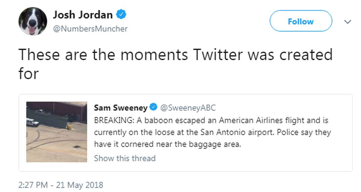 Twitter uses enjoyed cracking jokes after Dawkins, a Rhesus macaque, escaped his crate at the San Antonio International Airport on Monday, May 21, 2018.