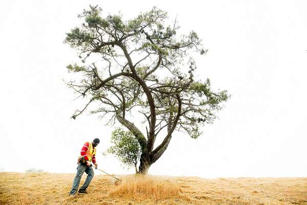 In preparation for fire season, Damion Bernard clears vegetation from Skyline Blvd. on Tuesday, May 22, 2018, in Oakland, Calif. Contracted by the Oakland Fire Department, Bernard and his crew will spend several days working in the area.