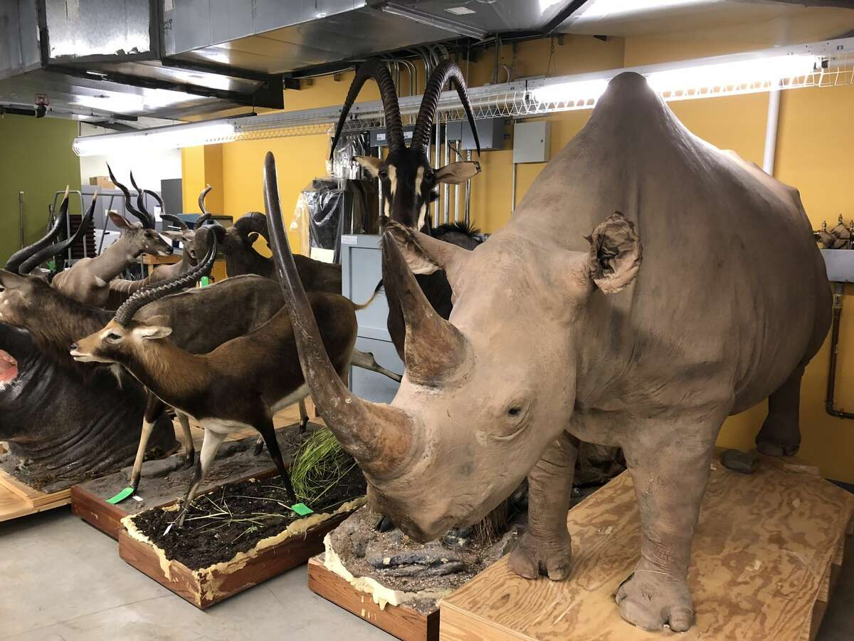 HIDDEN HOUSTON: Inside the Houston Museum of Natural Science's offsite storage space Housed inside a nondescript gated building on the northern end of Montrose are millions of artifacts the Houston Museum of Natural Science has no room to display at its Hermann Park campus. See what the museum has squirreled away...