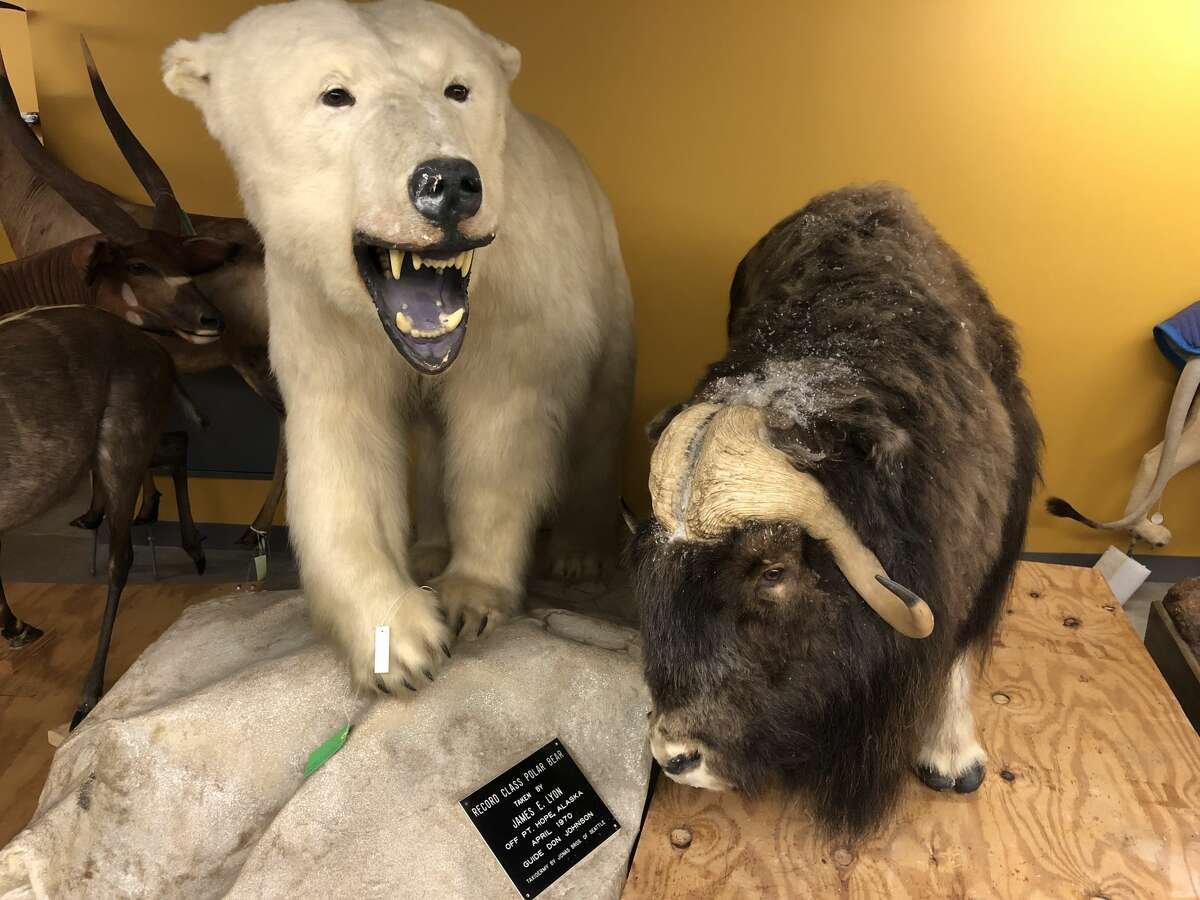 The taxidermy pieces have been mostly donated.