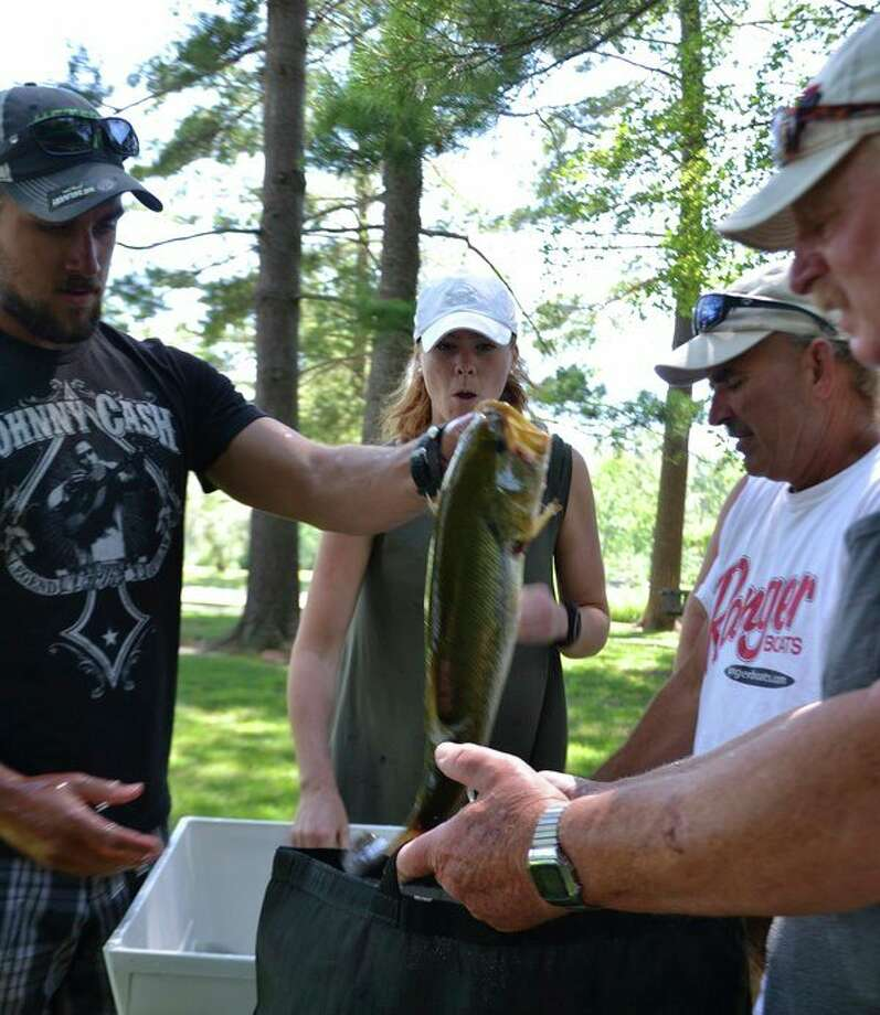 Bass get plenty of attention and respect. This largemouth bass was caught, weighed -- and then released -- during last year's Sanford Lake Open tournament. (Steve Griffin file photo/Hearst Michigan)