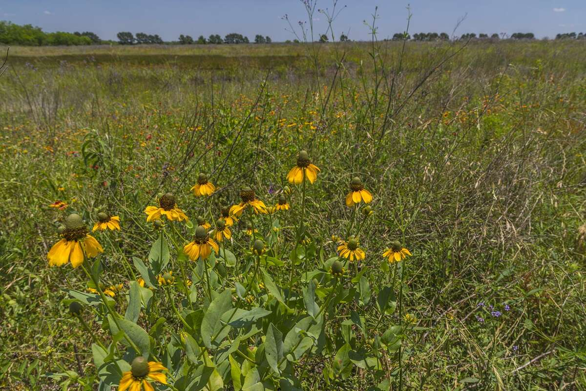 A field in the Katy Prairie west of Houston.