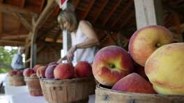 """Baskets of fresh peaches are ready for buyers at a fruit stand run by Russ and Lori Studebaker near Fredericksburg on Friday, May 25, 2018. """"We're really happy with the crop, it's really nice, really tasty,"""" Russ Studebaker said."""