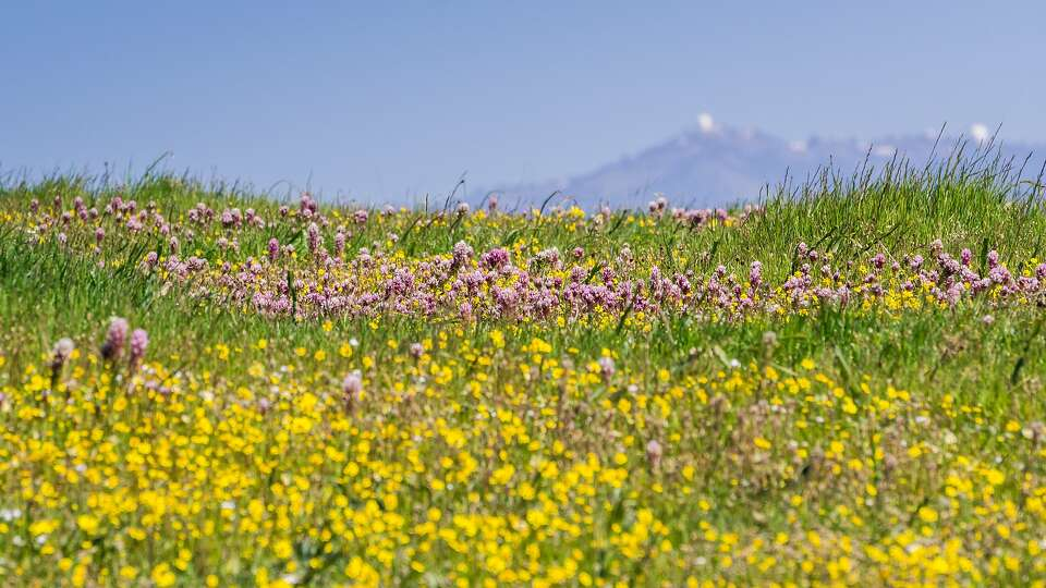 The 7 best places to find wildflowers in California this spring