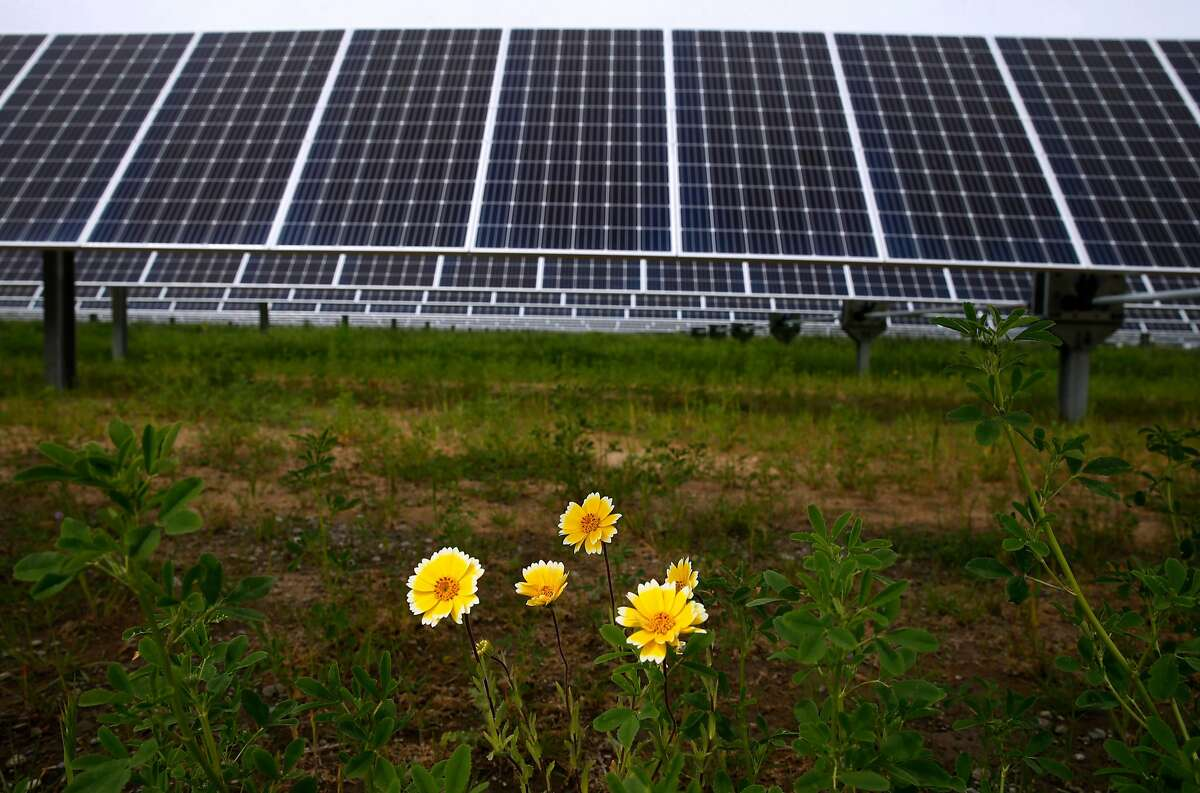 Wildflowers bloom below a solar panel array on land leased at the Chevron refinery in Richmond, Calif. on Wednesday, April 18, 2018. The MCE Solar One site, a joint project of Marin Clean Energy and sPower, contains nearly 36,000 solar panels on a 60-acre site which can generate renewal energy for up to 3,900 customers annually.