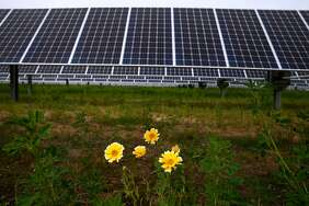 Wildflowers bloom below solar panels that were installed by Marin Clean Energy at the Chevron refinery in Richmond.