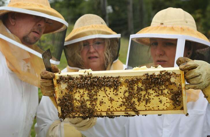 Mel and Jacquie Stringham, left, of Seattle, check out a bee hive honeycomb with the help of beekeeper Mariah McDonald, right, as they take part in a guest experience, The Amazing World of Bees, at Carmel Valley Ranch in Carmel Valley, Calif. on Sunday, May 20, 2018.